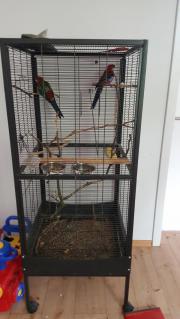 2 Papagei vogel