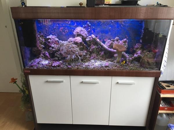 240 liter eheim meerwasser aquarium mit viel zubeh r in. Black Bedroom Furniture Sets. Home Design Ideas
