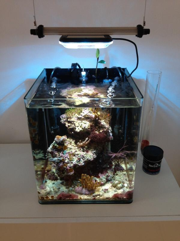 30 liter dennerle nano cube in dortmund fische aquaristik kaufen und verkaufen ber private. Black Bedroom Furniture Sets. Home Design Ideas