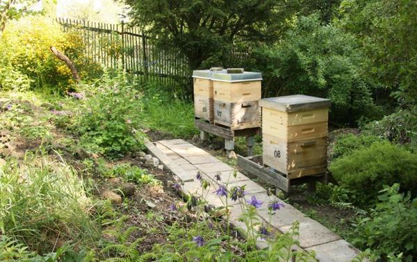 400m naturgarten f r bienenhaltung in gartenkolonie garten imker bienen in waldheim. Black Bedroom Furniture Sets. Home Design Ideas