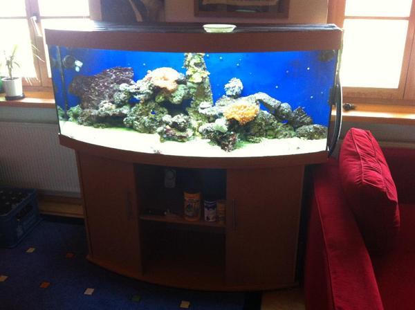 450l meerwasser aquarium mit kompl besatz fische korallen lebendgestein usw in gmund. Black Bedroom Furniture Sets. Home Design Ideas