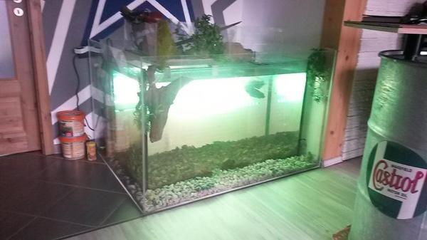 500l aquarium komplett inkl landteil f r. Black Bedroom Furniture Sets. Home Design Ideas