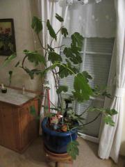 5x Zimmerpflanzen, 1x