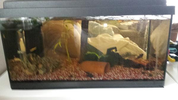 60l aquarium mit besatz und zubeh r in ehningen fische. Black Bedroom Furniture Sets. Home Design Ideas