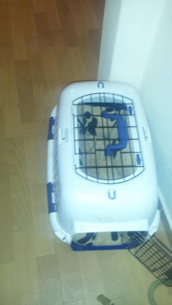 8 Monate Alte Katze Abzugeben In Dortmund Katzen Kaufen