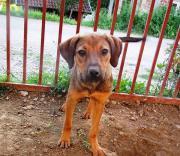 Alba wartet auf ein schönes Zuhause Mischling, jung, weiblich, aus Tierheim, für Hundeanfänger geeignet, Familienhund, kinderfreundlich. Alba wurde auf der Straße geboren, als ganz ... VHS D-91126Schwabach Heute, 08:31 Uhr, Schwabach - Alba wartet auf ein schönes Zuhause Mischling, jung, weiblich, aus Tierheim, für Hundeanfänger geeignet, Familienhund, kinderfreundlich. Alba wurde auf der Straße geboren, als ganz