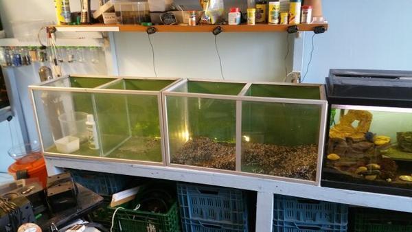 Aquarien aquarium heizung fische zubeh r co2 anlagen in for Aquarium heizung
