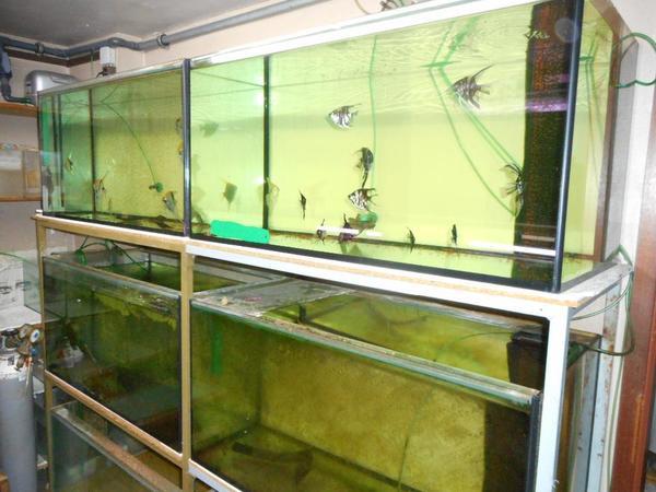 aquarien zum verkaufen in carlsberg fische aquaristik kaufen und verkaufen ber private. Black Bedroom Furniture Sets. Home Design Ideas