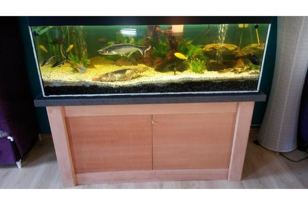 aquarium 500 liter in zeulenroda fische aquaristik kaufen und verkaufen ber private. Black Bedroom Furniture Sets. Home Design Ideas