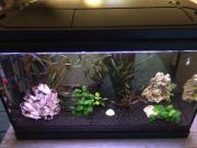 Aquarium 55 Liter