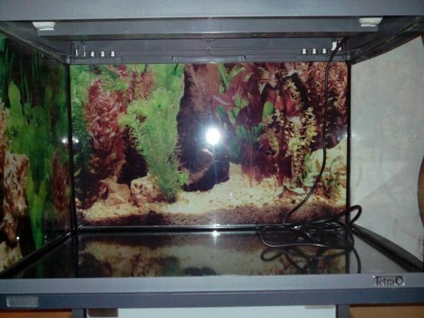 aquarium 60l tetra aqua art in sollstedt fische. Black Bedroom Furniture Sets. Home Design Ideas
