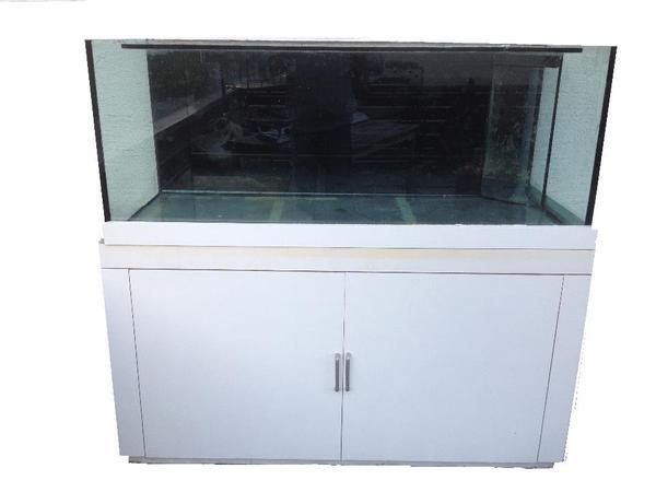 Aquarium » Fische, Aquaristik