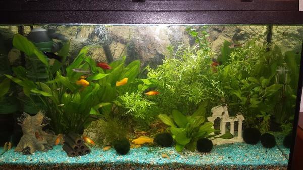aquarium in g ppingen fische aquaristik kaufen und. Black Bedroom Furniture Sets. Home Design Ideas