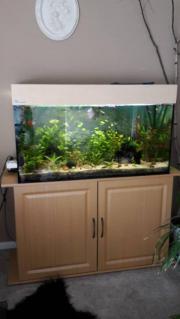 Aquarium Komplett 240