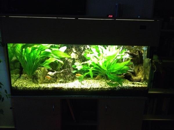 aquarium komplett in hildburghausen fische aquaristik. Black Bedroom Furniture Sets. Home Design Ideas