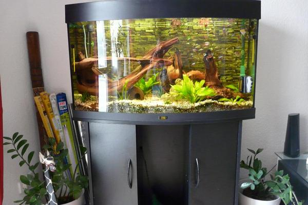 runde kleinanzeigen aquarium fische zubeh r deine. Black Bedroom Furniture Sets. Home Design Ideas