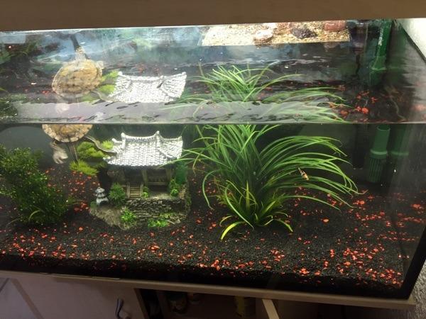 aquarium mit schildkr te und fischen in gladbeck fische aquaristik kaufen und verkaufen ber. Black Bedroom Furniture Sets. Home Design Ideas