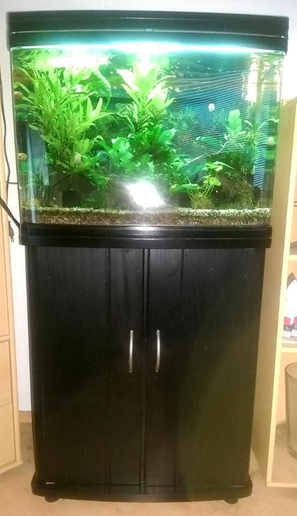 aquarium pass neu und gebraucht kaufen bei. Black Bedroom Furniture Sets. Home Design Ideas