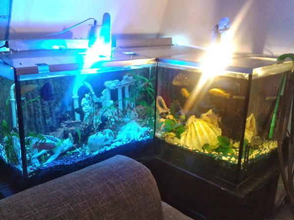 aquarium sonderanfertigung neu und gebraucht kaufen bei. Black Bedroom Furniture Sets. Home Design Ideas