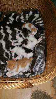 Babykatzen sind am