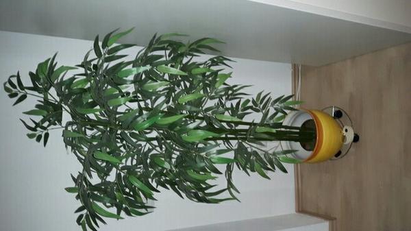 bambus kunst zimmerpflanze mit topf in karlsruhe dekoartikel kaufen und verkaufen ber private. Black Bedroom Furniture Sets. Home Design Ideas
