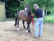 Barhuf-Pflege - Pferdetraining -