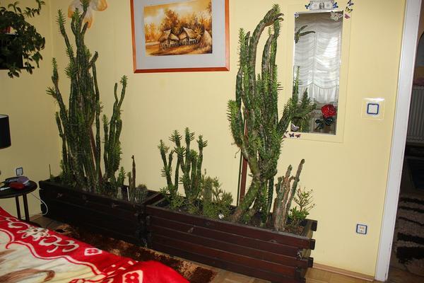 blumenk sten massivholz incl kakteen kaktus in forbach. Black Bedroom Furniture Sets. Home Design Ideas