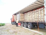 Brennholz Birke gehackt