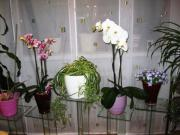 Deko-Glassäule / Blumenständer