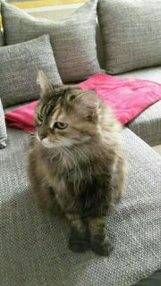 dringend Katze kostenlos
