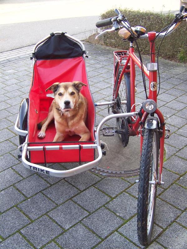Fahrrad mit seitenwagen sonstige fahrr der for Quoka baden baden