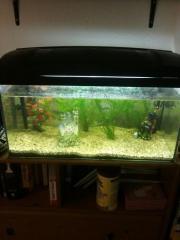 Fisch Tank