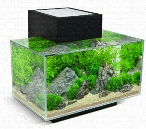 fluval edge aquarium in m nchen fische aquaristik. Black Bedroom Furniture Sets. Home Design Ideas