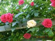 Gartenhilfe gesucht für