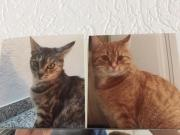 geschwister katzen