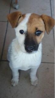 Gretel, 4 Monate