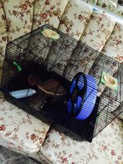 Hamsterkäfig, Käfig für