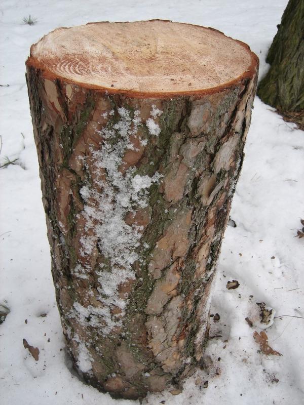 Holz Hackklotz Aus Kiefer 75cm Hoch 30 33 Aufstellfl Che