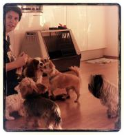 Hunde - Spielgruppe für