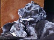 Hundebetreuung für zwei