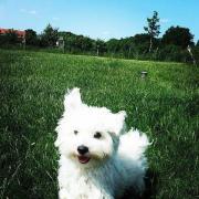 Hundesitter/Hundebetreuung