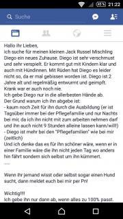 Jack Russel - Mischling