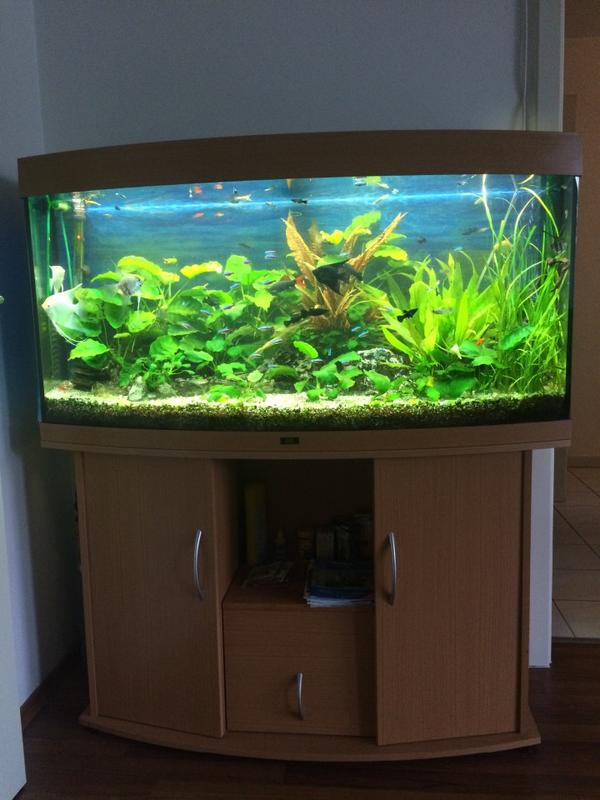 aquarium fische zubeh r in frankfurt am main kaufen bei deine. Black Bedroom Furniture Sets. Home Design Ideas