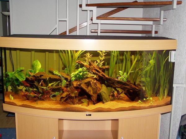 juwel vision 450 in dirmstein fische aquaristik kaufen und verkaufen ber private kleinanzeigen. Black Bedroom Furniture Sets. Home Design Ideas