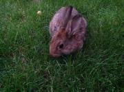 Kaninchenbaus