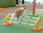 Kaninhopsport Kaninchen abzugeben