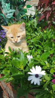 Katzen Babies Perser
