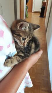Katzen Babys zu
