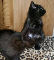 sonstige katzen in fichtelberg katzen kaufen verkaufen auf. Black Bedroom Furniture Sets. Home Design Ideas