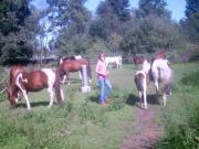 Kinder Pony-Freizeit,